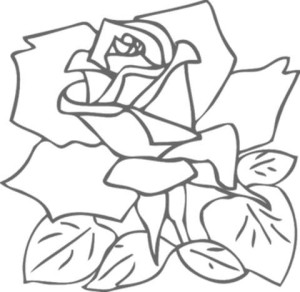 drawing-a-rose