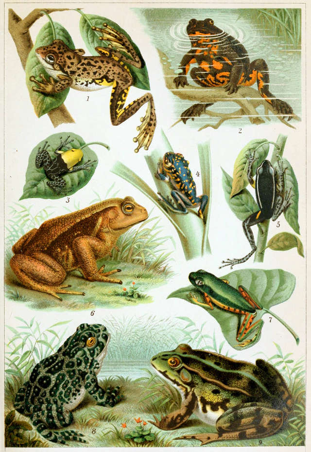 different-frogs-picture