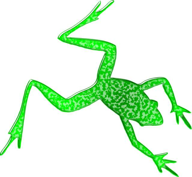 birds-eye-view-on-frog