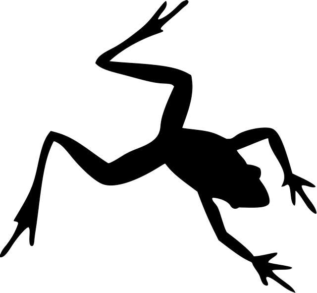 silhouette-of-frog-birds-eye-view