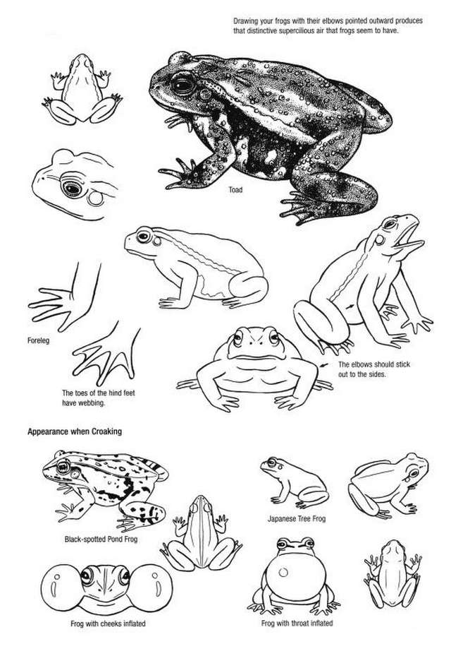 how-to-draw-frogs-tips